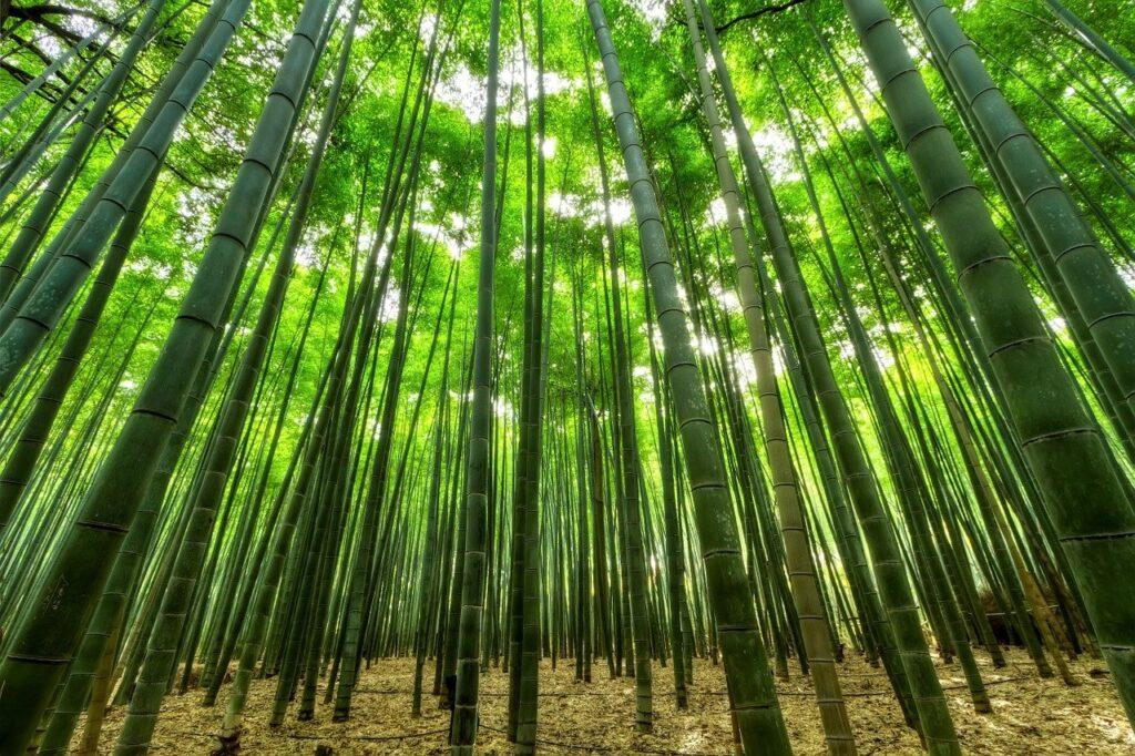 ものすごい数の竹が乱立している画像.alt